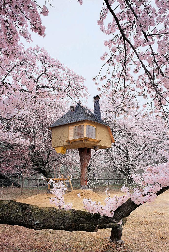 Японская чайная для любования сакурой