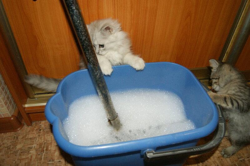 К чему сниться сон мыть полы