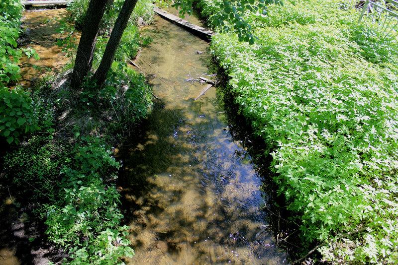 Река Мошляйка. 24 мая 2015 года