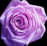 «Romantique» 0_7c43f_1d14a6ba_S