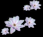 «Magic of Flowers» 0_7c4af_fad03e12_S