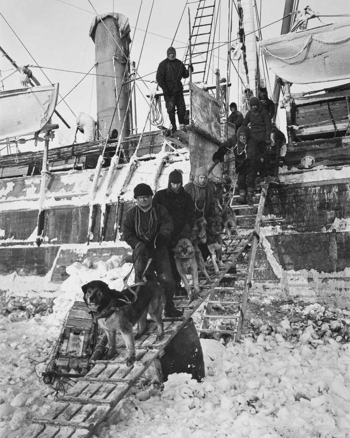 12. Экипаж перемещает собак на лед.