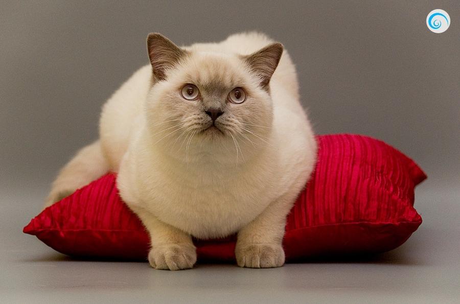 Если кошка стоит около вас с поднятым
