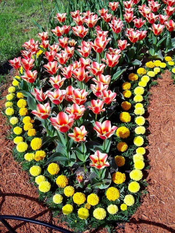 Цветочная композиция на выставке тюльпанов