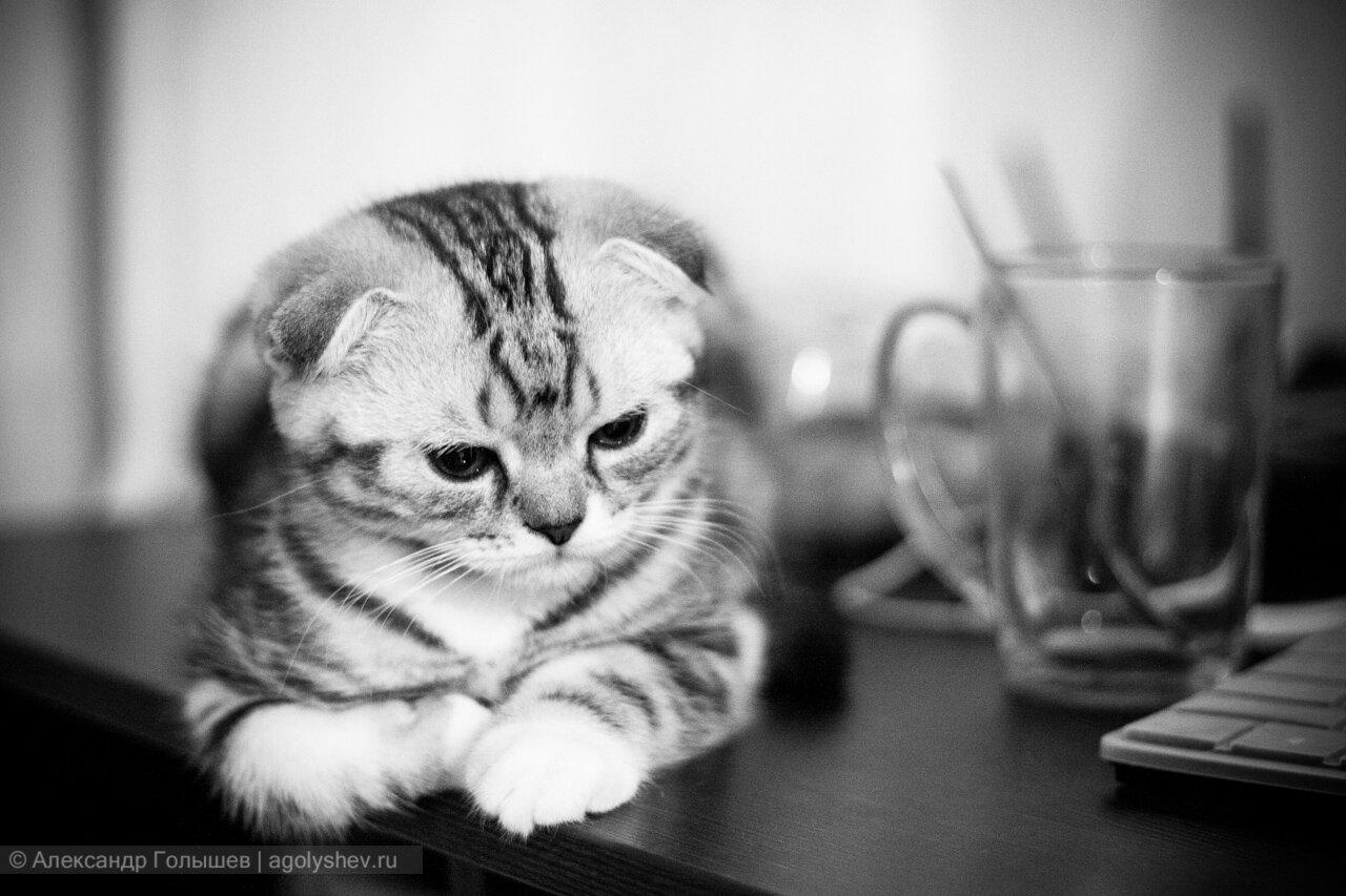 картинки коты черно-белые