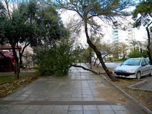 После сильных дождей упало дерево