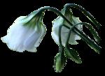 1116 - flower - LB TUBES.png