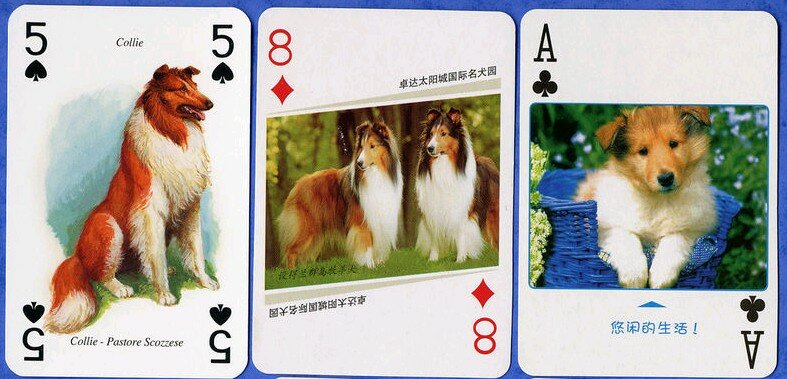 Rough collie playing cards (1)