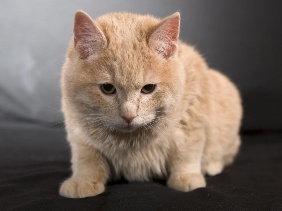 Флегматичний котик