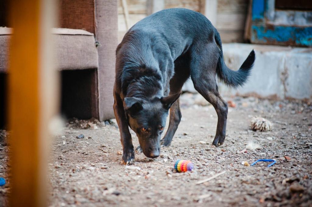 Дана собака из приюта догпорт