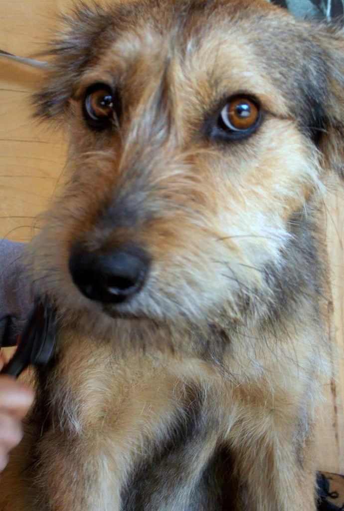 Эмма кукла собака из приюта догпорт