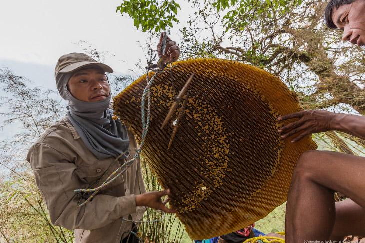 Неизвестные Гималаи: охотники за медом диких пчёл. (26 фото)