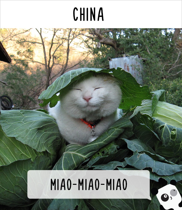 Китай — ми-ми-ми.