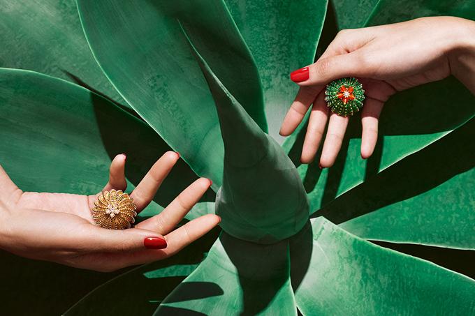 Cactus-de-Cartier.jpg