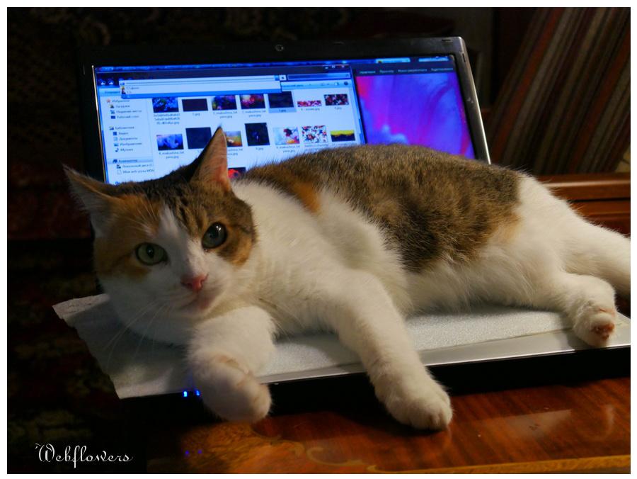 кошка Мурка