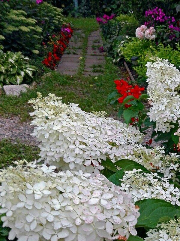 Август в райском садике