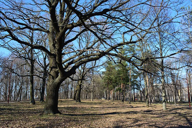 парк в апреле дубы.jpg