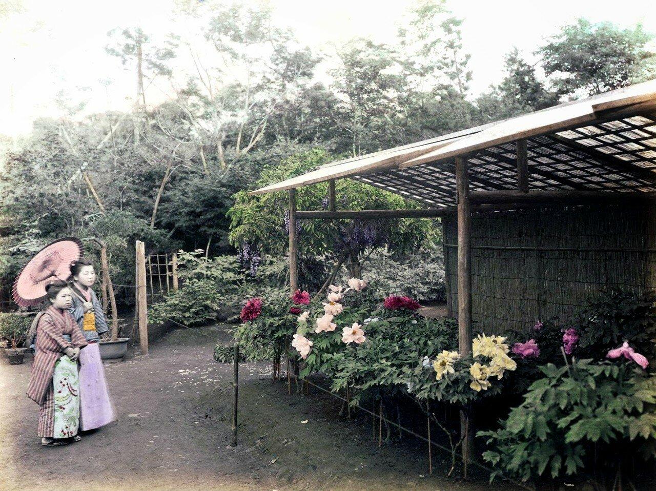 Токио. Сад пионов. 1910