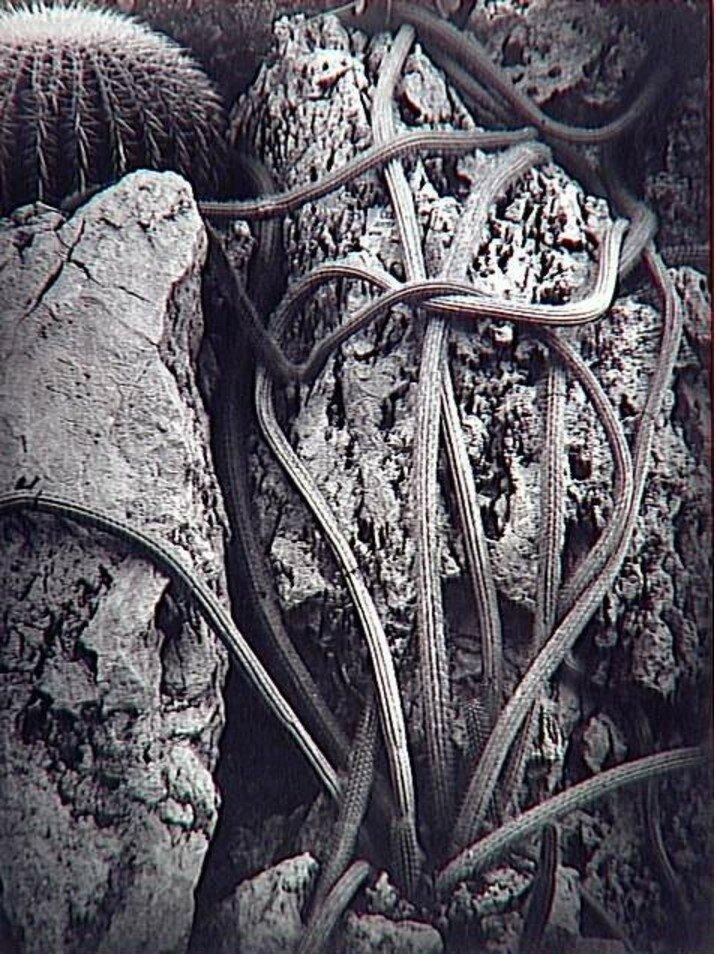 1934. Кактус, Монако