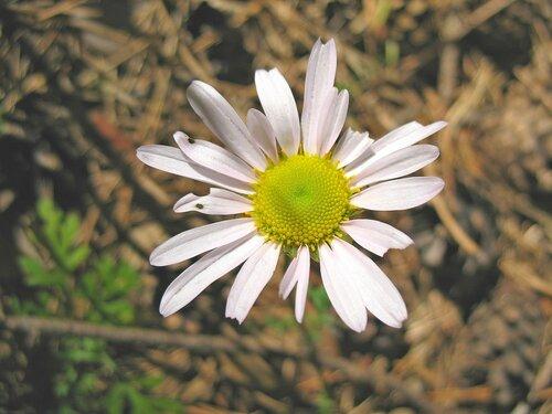 Цветок в лесу.