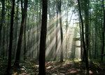 Мой лес