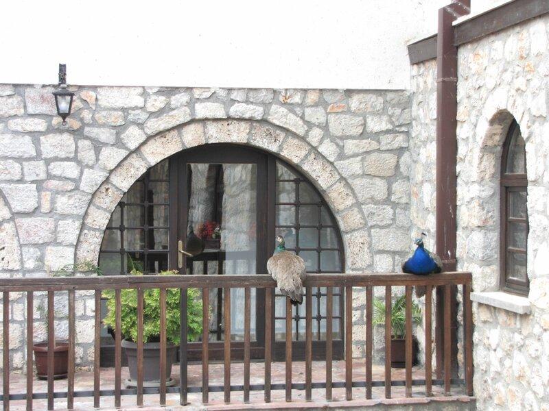 Охрид. Живность