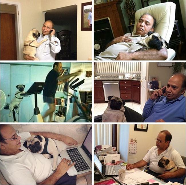 © Pukamania  Сперва мой папа отказывался заводить собаку. Недавно нашел это фото вего комнате