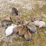 okunoshima-rabbit-island-japan-11.jpg