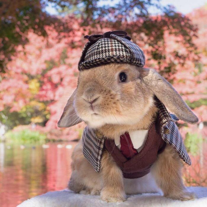 Кролик в образе почтальона