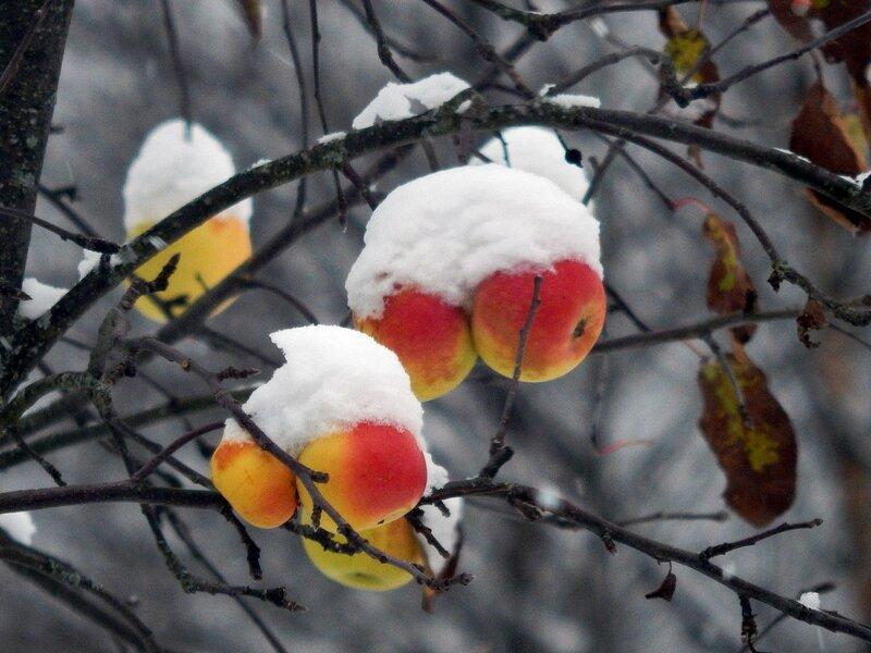 В шапках снежных