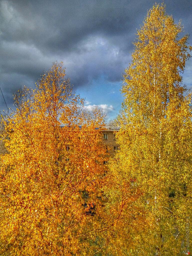 Златоустовское золото осени