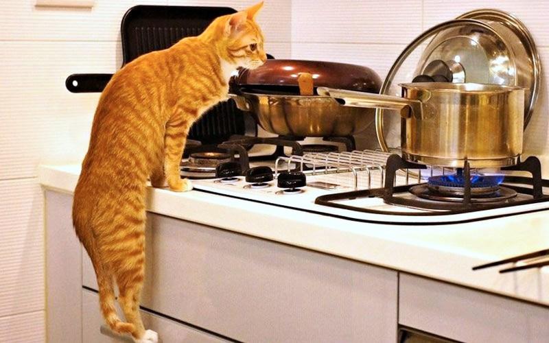 кошки-кошки-6.jpg