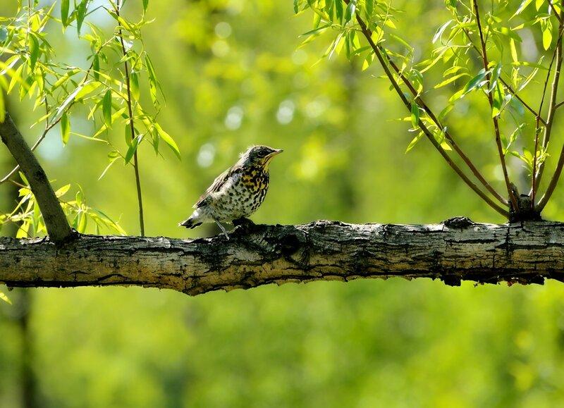 Одинокий птенчик