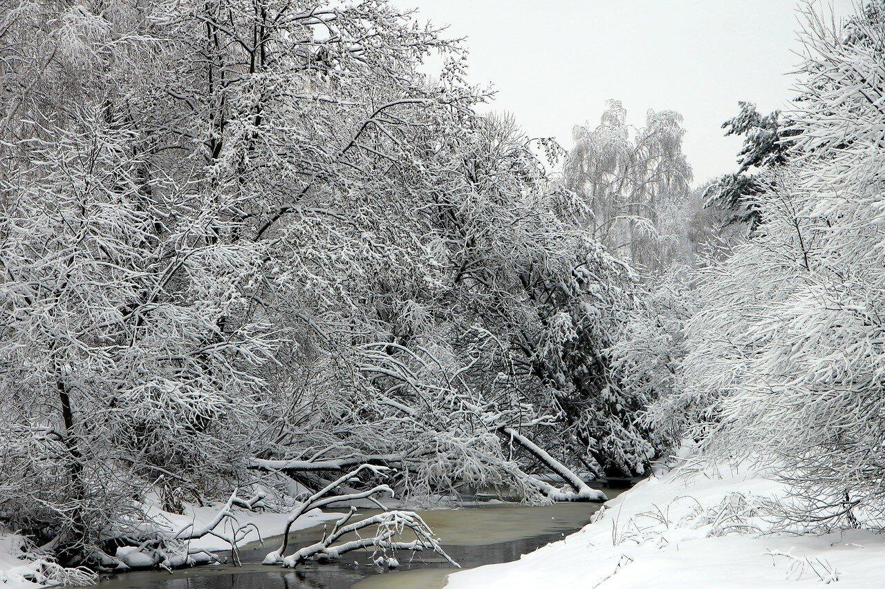 Зимний лес после снегопада. Западная Беларусь