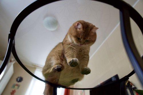 кот хосико кот в сапогах в реальной жизни