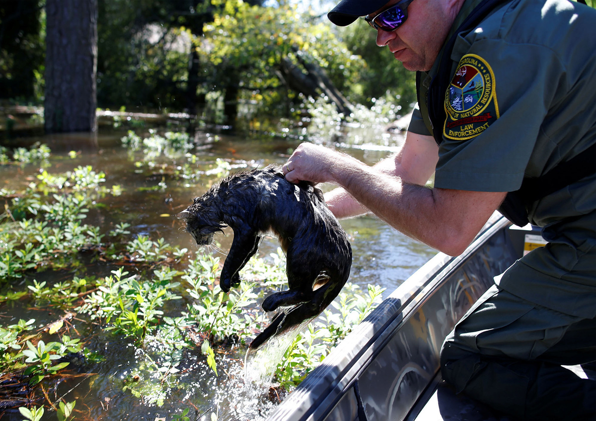 25. Офицер Департамента природных ресурсов Южной Каролины Грегг Лоуэри спасает кошку во время наводн