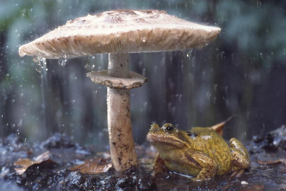 14. Зонт из одуванчика. (Фото Andiyan Lutfi):