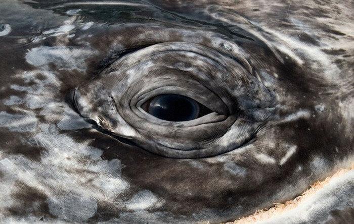 Кристофер Суонн   прекрасные фотографии китов и дельфинов