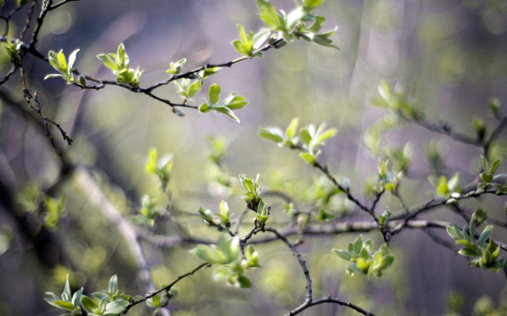 Nature___Seasons___Spring_The_first_spring_green_072714_.jpg