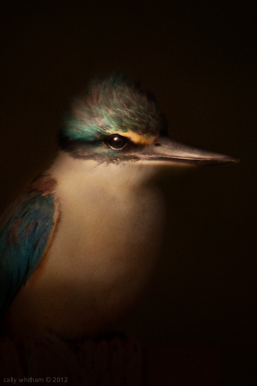 Photograpic Artworks by Cally Whitham