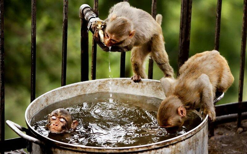 Animals___Monkeys.jpg