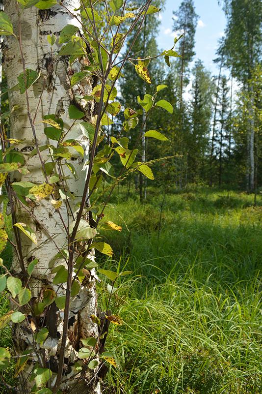 леса 25.jpg