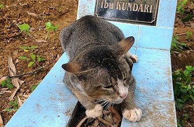 В Индонезии кошка целый год навещала могилу хозяйки