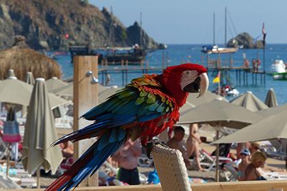 Турецкие курорты снова самые востребованные у россиян