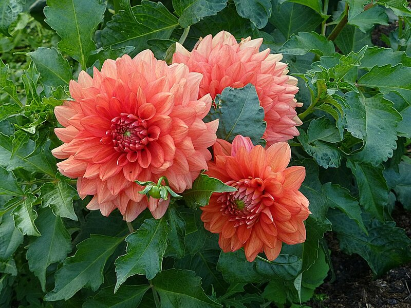 Чудо цветения