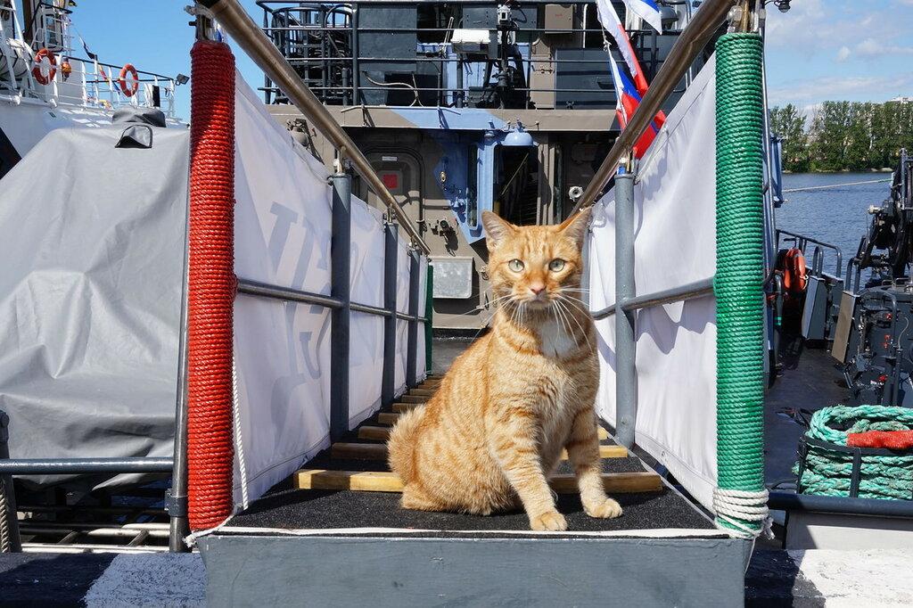 Международный военно-морской салон (2017) в СПб, противодиверсионный катер проекта 21980 «Нахимовец».