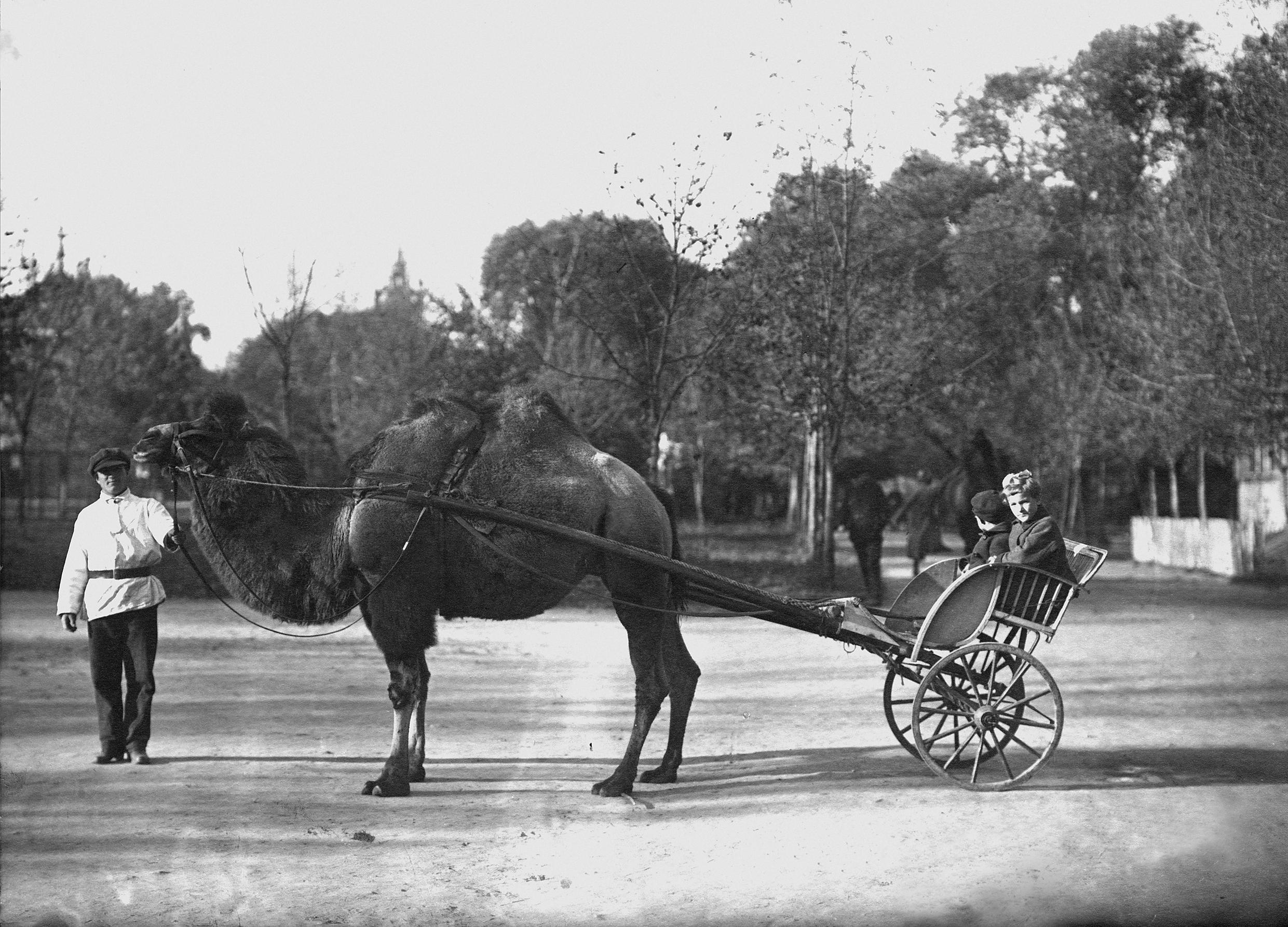 Катание детей на верблюдах, 1924 год. Фото: архив Московского зоопарка.