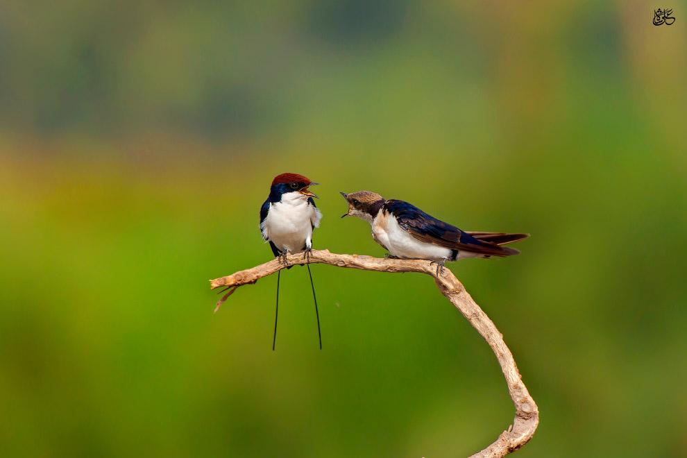 7. Кара?моры. Живут в сильно и умеренно увлажнённых биотопах: в лесах и других древесных насажд