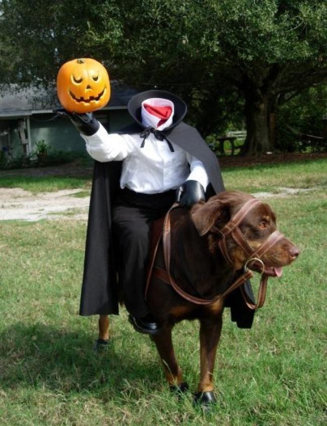 Пес косплеит Всадника без головы.
