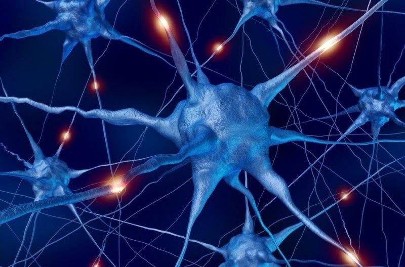 Ученые: допамин вмозгу помогает лучше запоминать лица